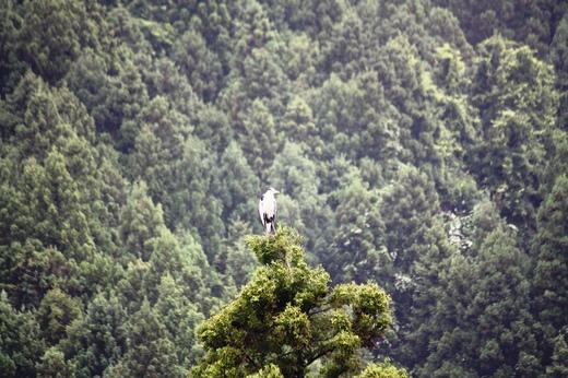 杉の木の上にいるものは(2)