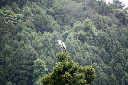 杉の木の上にいるものは(3)