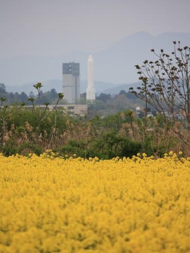 菜の花畑とロケット