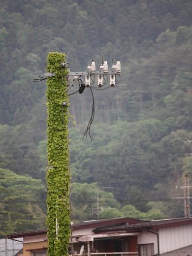 ツタの絡まる電柱