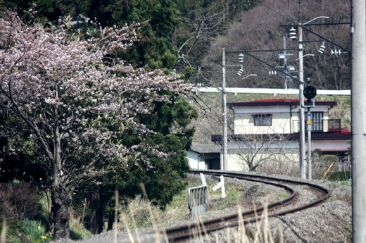 桜のある風景1