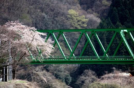 桜のある風景3