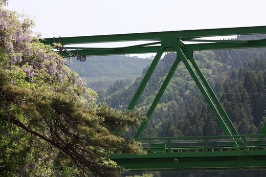 鉄橋そばの藤の花