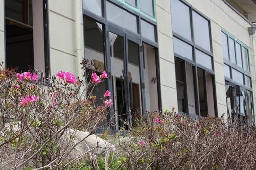 被災した建物のまた宜しくお願いしますに綺麗な花が・・・