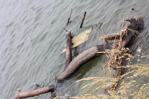 水中の津波で流された松の木