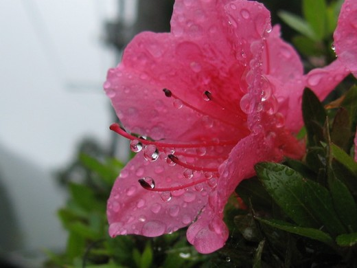 雨の日写真2