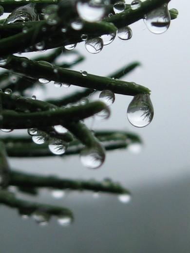 雨の日写真5