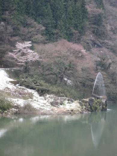 春の雪と桜と噴水