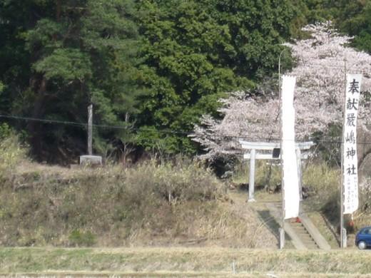 神社前の桜