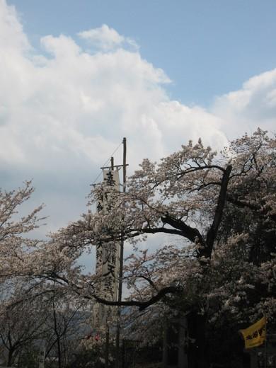 空と桜と幟