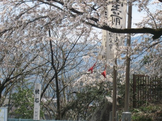 The.桜