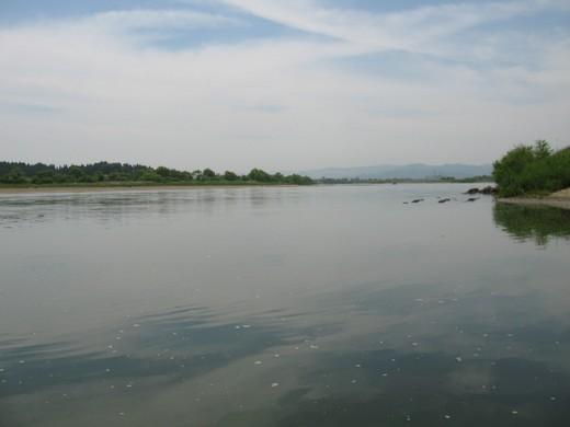 岸辺の風景1